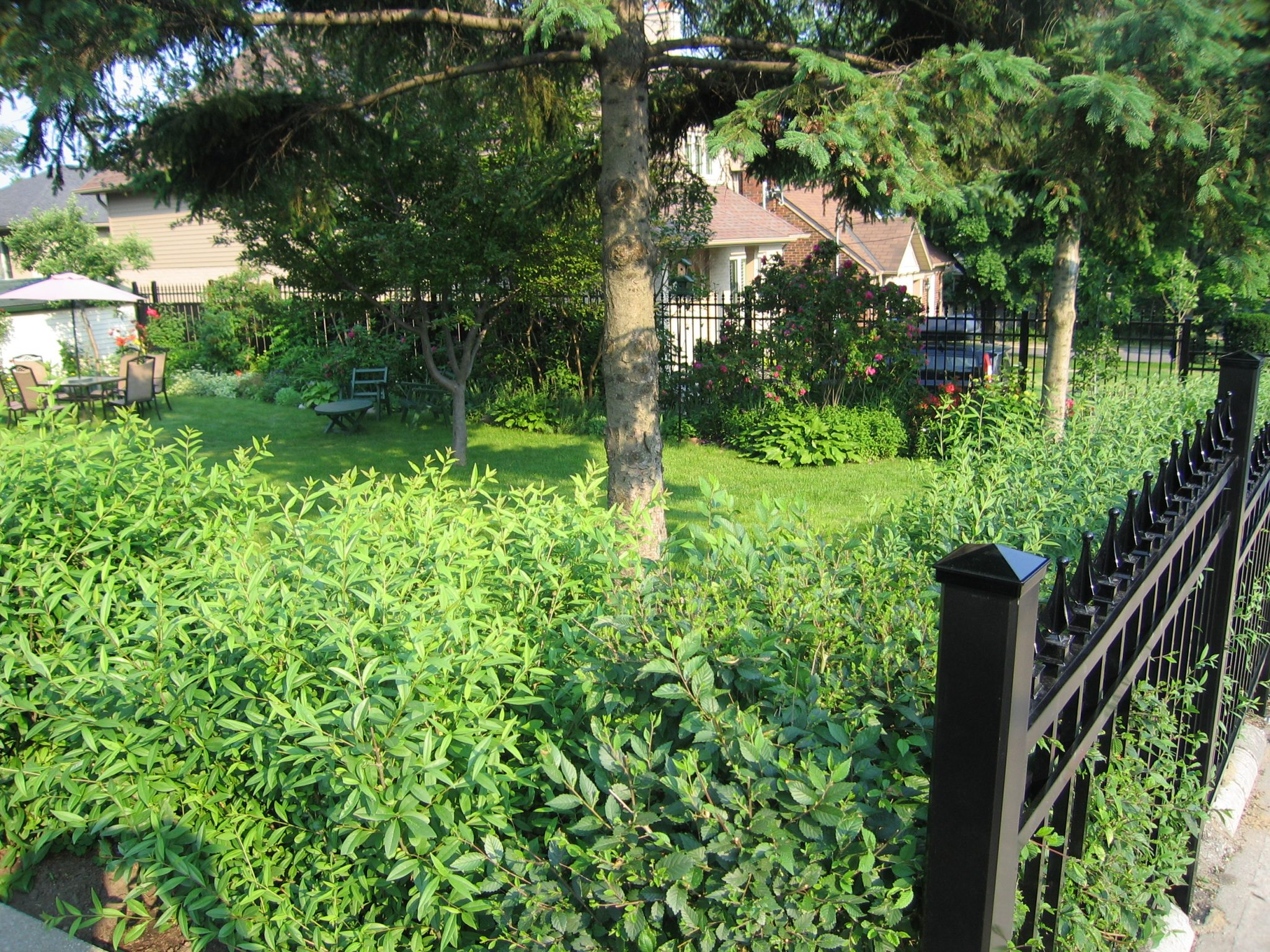 Yard with bushes.
